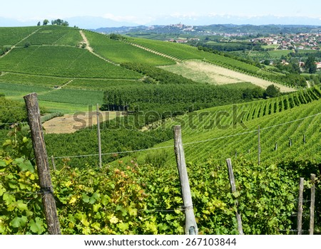 Summer landscape in Langhe (Piedmont, Italy), with vineyards