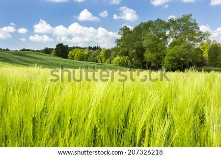 Summer landscape in north Poland.Pomerania province/Summer landscape - stock photo