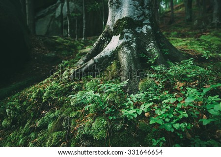 Summer landscape in the forest. The trunk of a beech wood. Low contrast. Color toning - stock photo