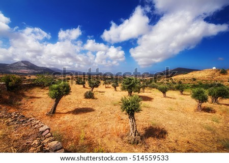 Summer landscape - Naxos island, Greece