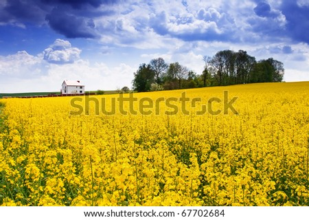 summer landscape of farm fields and the beautiful blue sky