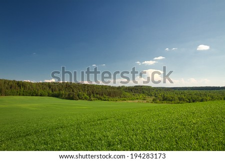 summer landscape of fields and woods