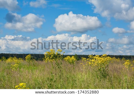 summer landscape of flowering meadows near the woods and white clouds on blue sky on a sunny day