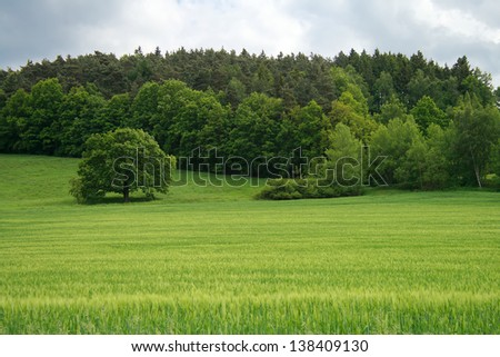 Summer landscape of grass and trees - stock photo