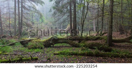 Summer landscape of old forest and broken moss wrapped tree lying in mist - stock photo