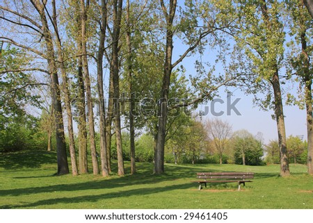 Summer landscape of young green forest with bright blue sky