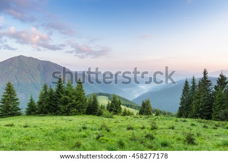 Summer landscape on a sunny morning. Spruce forest in the mountains. Green grass in the meadow. Beauty in nature. Carpathians, Ukraine, Europe - stock photo