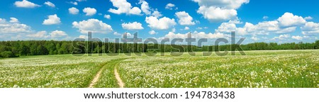 summer landscape panorama with  blossoming  field  with the road and blue sky - stock photo