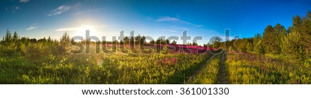summer landscape panorama with the blossoming meadow, sunrise - stock photo