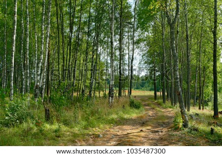 Summer landscape. Path in the birch forest. Russia, Karelia.