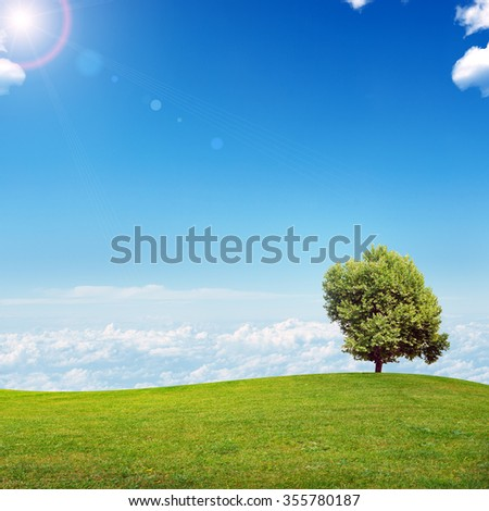 Summer landscape picture with blue sky and green grass