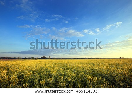 summer landscape sunrise in blossoming fields near the forest