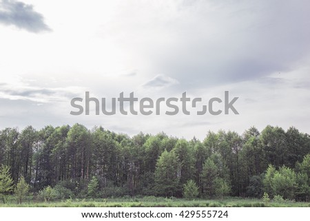 Summer landscape. trees and blue evening sky - stock photo