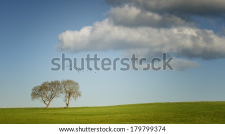 summer landscape, two trees and birds - stock photo