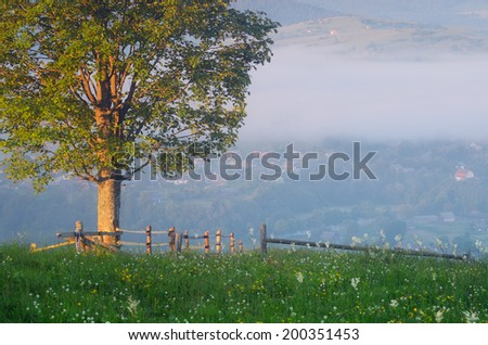Summer landscape with a fence and a lone tree on a hill. mountain Village