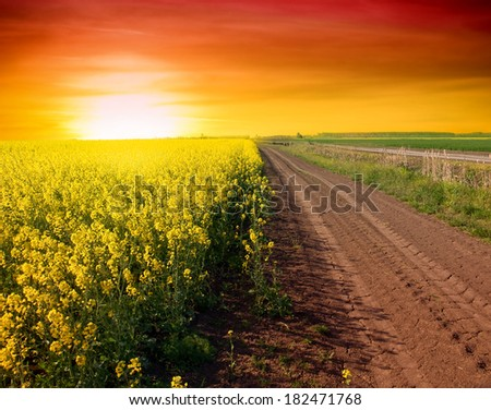 Summer Landscape with a field of yellow flowers. Sunrise - stock photo