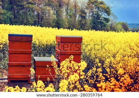 Summer landscape with beehives in a field with blooming flowers  - stock photo