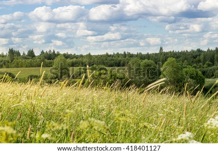 Summer landscape with blue sky and meadow grasses.