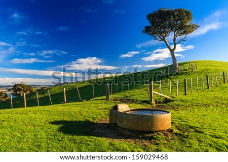 Summer Landscape with Blue Sky on the Pacific Sea Coast, Duder Regional Park, Auckland Region, New Zealand - stock photo