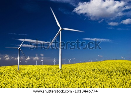 summer landscape with blue sky, yellow expanse with rapeseed flowers and the background wind turbines