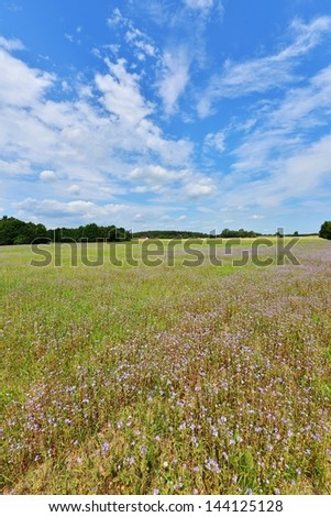 Summer landscape with clouds and flowers field - stock photo