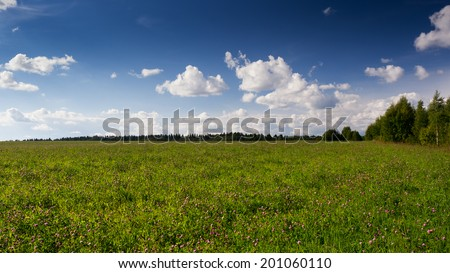Summer landscape with clover field and blue sky - stock photo