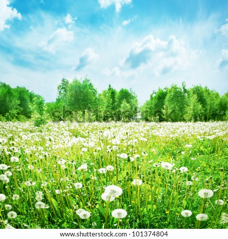 Summer landscape with dandelion field and blue sky. - stock photo