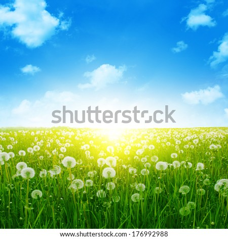 Summer landscape with dandelion field,blue sky and sun.  - stock photo