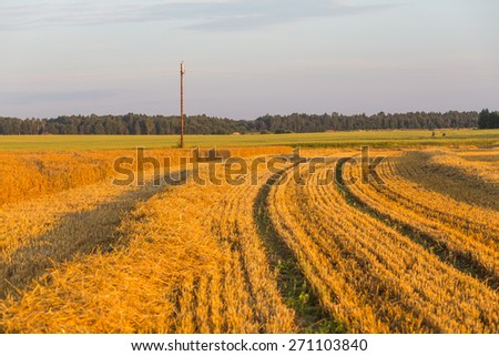 Summer landscape with farm fields during sunset - stock photo