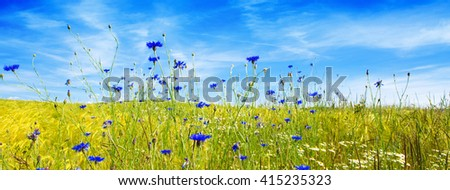 Summer landscape with flower meadow and clouds.