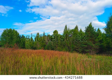 Summer landscape with grass, forest, sky and clouds - stock photo