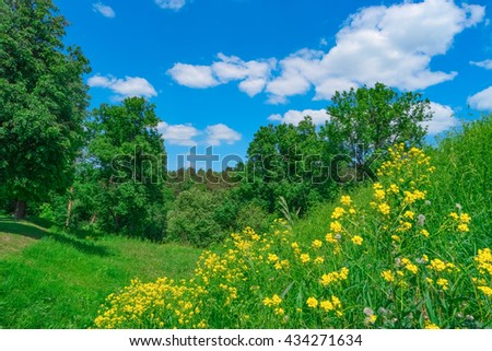 Summer landscape with grass, forest, sky and flowers - stock photo