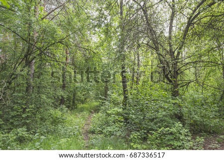 Summer landscape with green colors in the vicinity of Ivatsevichi, Belarus.
