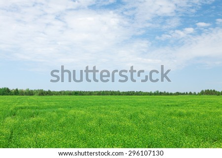 Summer landscape with green grass field and blue sky - stock photo