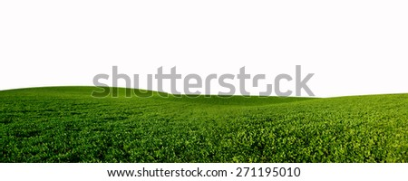 Summer landscape with green grass; Isolated On White Background - stock photo
