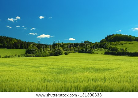 Summer landscape with green grass on a meadow and clear blue sky