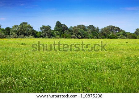 Summer landscape with green meadow under blue sky - stock photo