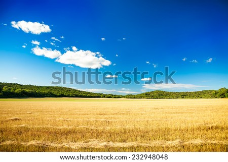Summer Landscape with Mown Wheat Field on the Background of Beautiful Sky. Agriculture Concept. Copy Space. - stock photo