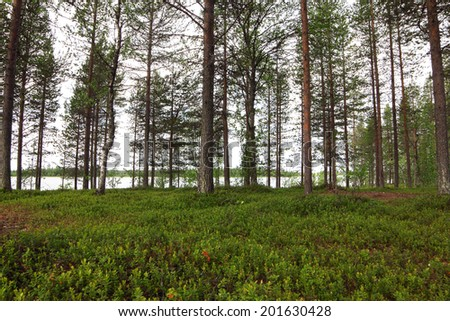 Summer landscape with pine forest and lake - stock photo