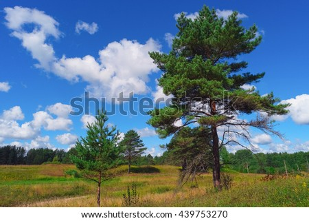 Summer landscape with pine trees, grass, sky and clouds - stock photo