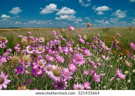 summer landscape with pink wildflowers and blue sky - stock photo