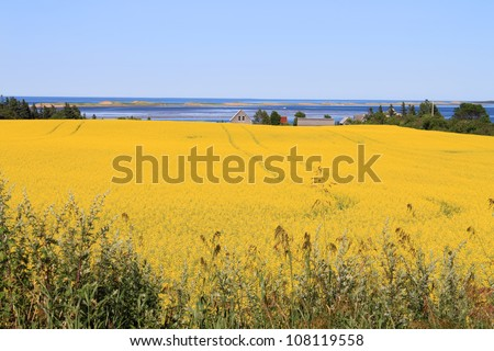 Summer landscape with rapeseed fields and ocean in central Prince Edward Island, Canada - stock photo