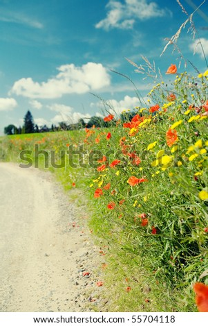 Summer landscape with red poppies at a country road - stock photo