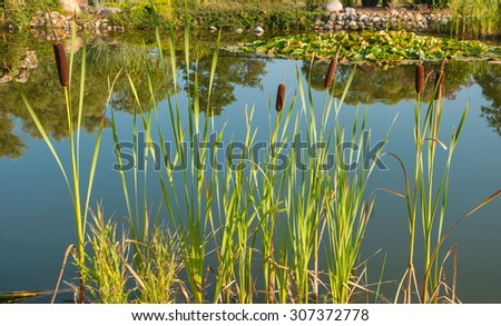 Summer landscape with reeds and marsh - stock photo