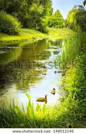 summer landscape with river in park - stock photo