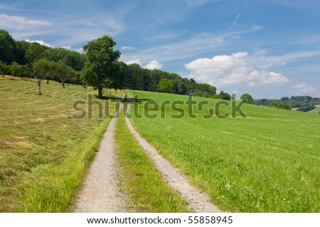 summer landscape with road, grass and tree