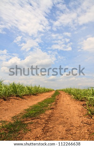 Summer landscape with  sugar cane, road and clouds