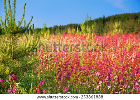 summer landscape with the blossoming  meadow - stock photo