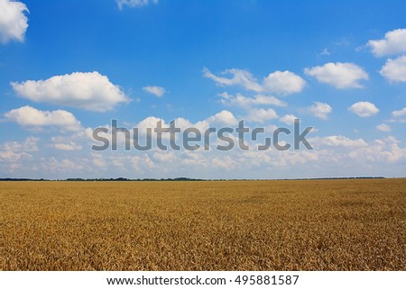 Summer landscape with wheat field and blue sky
