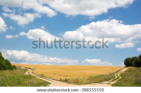Summer landscape with wheat field and two roads - stock photo